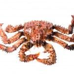King crab — Stock Photo #2760902