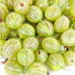 Gooseberries - Zdjcie stockowe