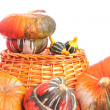 Turban squashes and ornamental gourds — Stock Photo