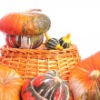 Turban squashes and ornamental gourds - Stock Photo