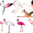 Flamingo collection — Stock Vector