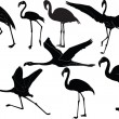 Flamingos collection — Stock Vector