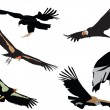 Stock Vector: Condors collection