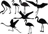 Flamingos collection — Stock Vector