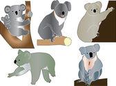 Koala collection — Stock Vector