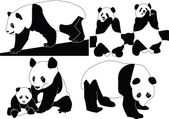 Panda collection — Stock Vector