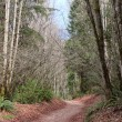 Trail through Pacific Northwest Forest — Stock Photo