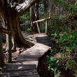 Rainforest Boardwalk with Steps — Stock Photo