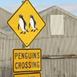 Penguin Crossing — Stock Photo