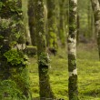 Stock Photo: Forest Detail