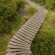 Boardwalk Path — Stock Photo