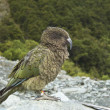 Stock Photo: KeBird