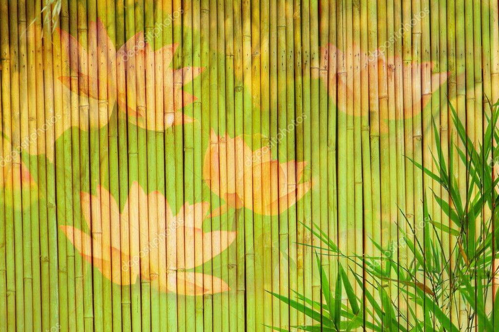 Lotus and bamboo background   Stock Photo #2709988
