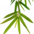 Bamboo leaves — 图库照片