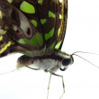 The butterfly on white isolated — Stock Photo