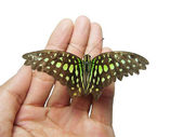 Butterfly on a hand — Stock Photo