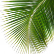 Green palm leaf — Stock Photo #3073641