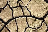 Drought ground — Stock Photo