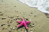 Starfish — Стоковое фото