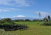 Kilimanjaro in Kenya — Stock Photo