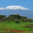 Kilimanjaro in Kenya — Stock Photo #2972440