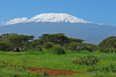 Kilimanjaro in Kenya — Stock Photo
