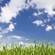 Royalty-Free Stock Photo: Green grass, sky