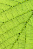 Leaf background vertical — Stock Photo