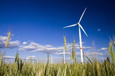 Windmills in a field of rye — Stock Photo