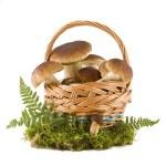 Boletus mushrooms in a basket — Stock Photo #3820178