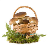 Boletus mushrooms in a basket — Stock Photo