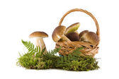 Boletus mushrooms in and out the basket — Stock Photo