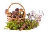 Boletus mushrooms in the basket — Stock Photo