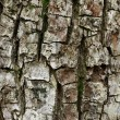 Tree bark texture — Stock Photo