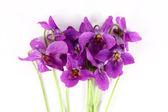 Violet flower — Stock Photo