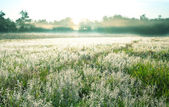 Morning meadow — Stock Photo