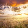 Stock Photo: Field on sunset