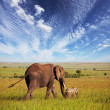 Elephant — Stock Photo #3034589