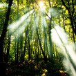 Royalty-Free Stock Photo: Sunny forest