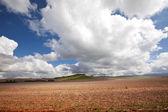 Fältet och moln — Stockfoto