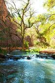 Creek — Zdjęcie stockowe