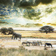 Royalty-Free Stock Photo: Africa