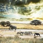 Africa — Stock Photo #3043791