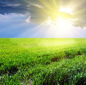 Sunny field — Stock Photo