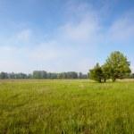 Grassland — Stock Photo #3112628