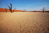Dead valley in the Namibia — Stock Photo