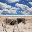 Zebras — Stock Photo #3392867