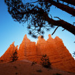 Stock Photo: Bryce canyon