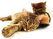 Kat en boot — Stockfoto