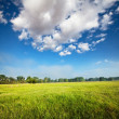 Meadow — Stock Photo #3711098